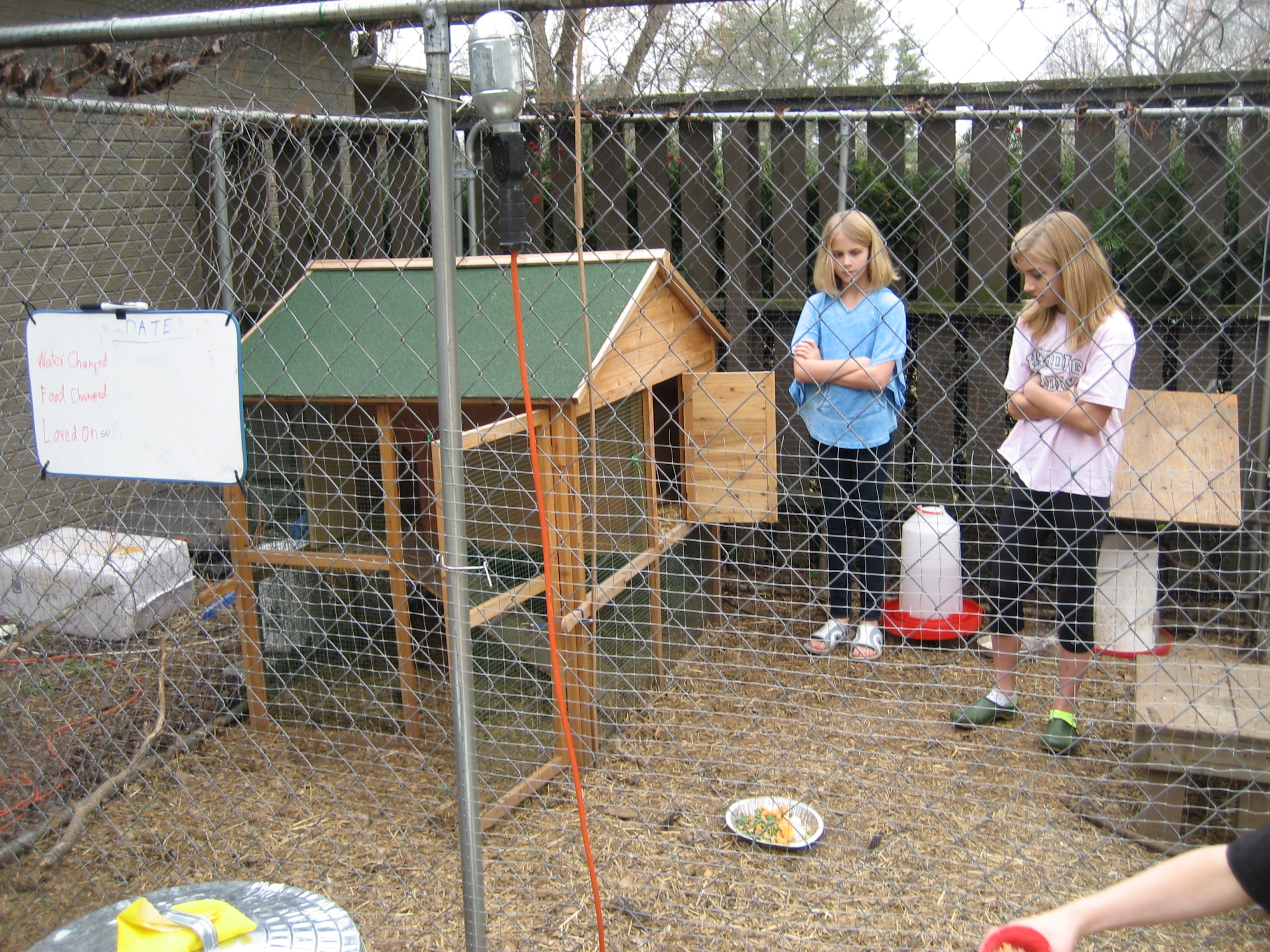 the backyard chicken gal a city u0027s journey with her hens